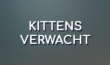 kittens verwacht